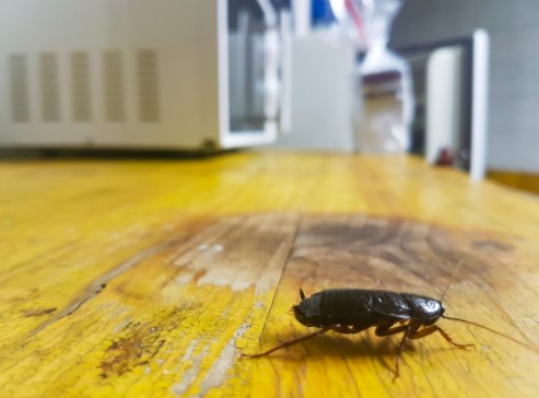 how to get rid of bugs in kitchen