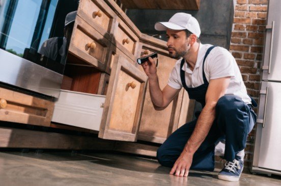 how to get rid of kitchen pests